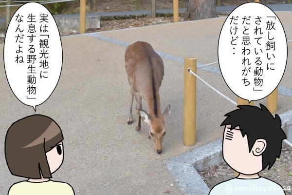 奈良公園 鹿 鹿を眺める人